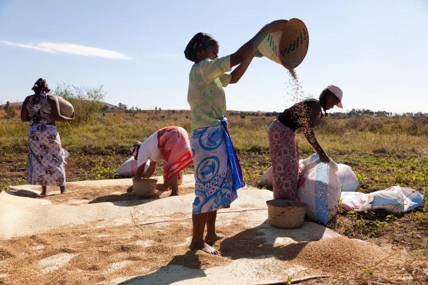 Locust Control in Madagascar
